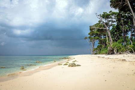 Stunning view A beautiful tree lying on the beach,