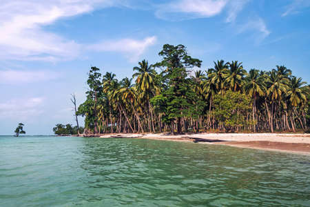 Tall coconut palm trees over tropical island resort beach in Fiji