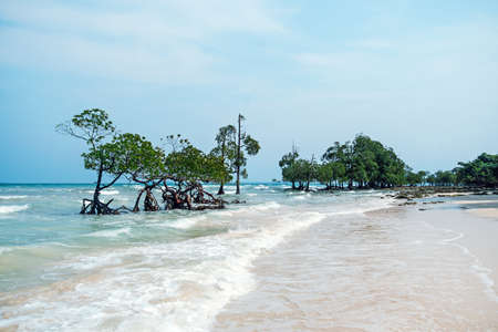 mangrove trees in the water Фото со стока
