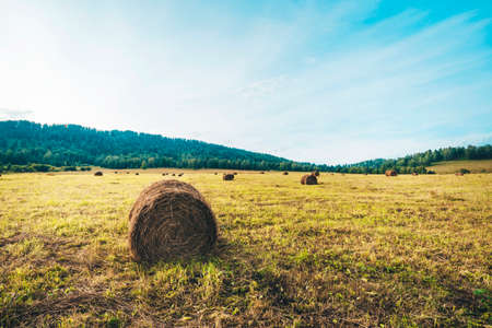 Beautiful countryside landscape. Round straw bales in harvested fields and blue sky with clouds. harvesting in the field in the mountains Foto de archivo - 131278904