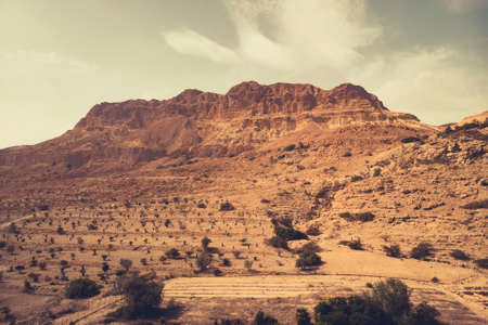 Scenic view of a grand mountain cliff and plantation laid out at mountain foot. Plant life in arid desert. Ein Gedi nature reserve off the coast of the Dead Sea ,Israel. Torrid climate.