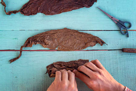 Closeup of hands making cigar from tobacco leaves. Traditional manufacture of cigars. Cuban cowboy is making a cigar for tourists. Vinales. view from the top. Zdjęcie Seryjne