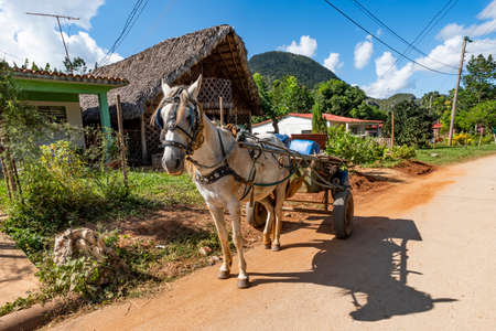 heavy horse harnessed to a cart stands on the street on a village road against the background of sheds, houses and mountains. Banco de Imagens
