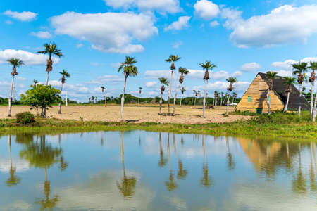 Pond with reflection of palm trees. Rural area in Cuba.