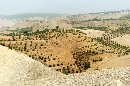 Green bushes grow on the hillside in the middle East desert.
