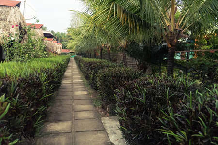entrance to a bamboo house with palm trees and park. path in the Park with ornamental plants and palm trees 版權商用圖片