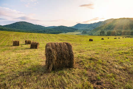 Round bales of straw on a stubble field. Harvesting in autumn. Round bales of hay against the mountains.