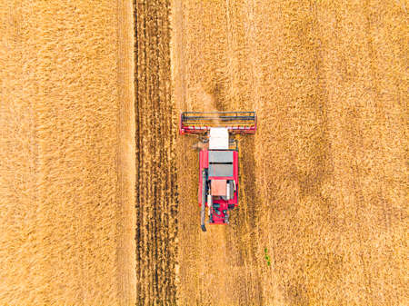 Aerial view on the combine working on the large wheat field. Haymaking and harvesting in early autumn on the field. Tractor mows dry grass. Preparation for the winter