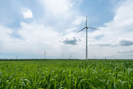 green: Green field of wheat and wind turbines generating electricity Stock Photo