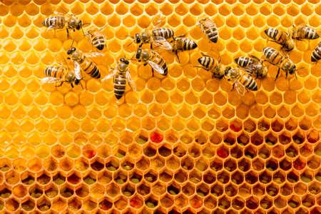 close-up van bijen op de honingraat in bijenteelt - selectieve aandacht, kopie ruimte Stockfoto