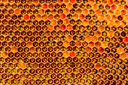 apiary: closeup of bees on honeycomb in apiary - selective focus, copy space Stock Photo