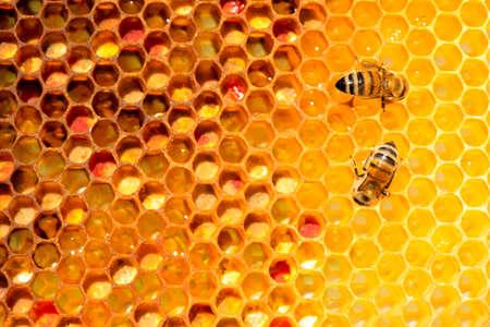 primo piano di api sul nido d'ape in apiario - messa a fuoco selettiva, copia spazio