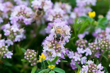 野生蜂 - セレクティブ フォーカス、コピー スペース タイムのクローズ アップ 写真素材
