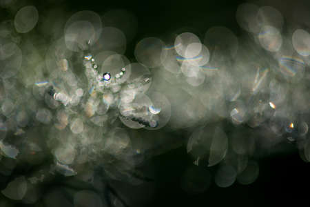 Abstract composition with  dew drops over plants - selective focus, copy space Stock Photo