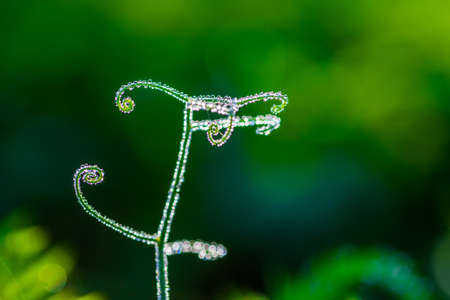 Abstract composition with  dew drops over pea plants - selective focus, copy space