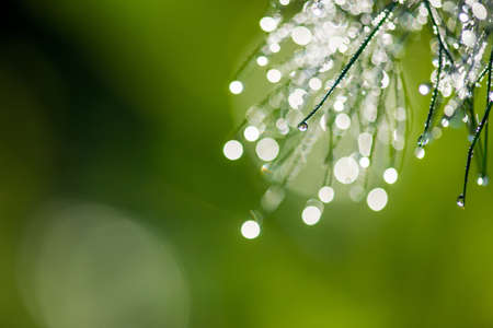 Abstract composition with  dew drops over dill plants - selective focus, copy space