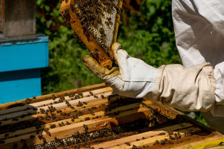 Beekeeper working on his beehives in the garden - copy space