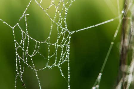 Gros plan d'un filet d'araignée sur fond vert - mise au point sélective, espace copie Banque d'images - 92630465