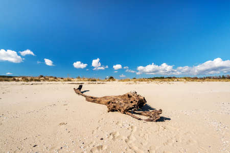 Sandy beach and rotted wood landscape - copy space Stock Photo