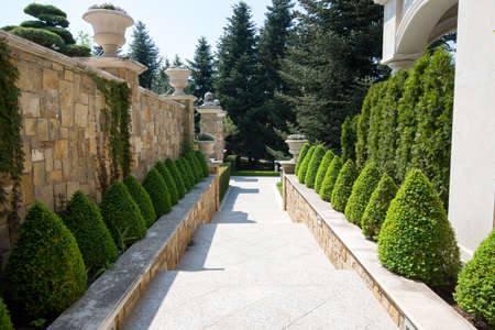 Modern garden design with box trees bushes and plants near the path Stock Photo