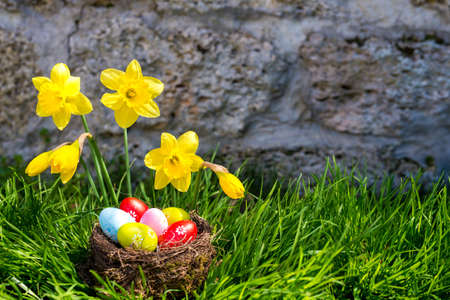 Easter background with blooming daffodils and  eggs in a nest over fresh green grass against stone wall - copy space Stock Photo