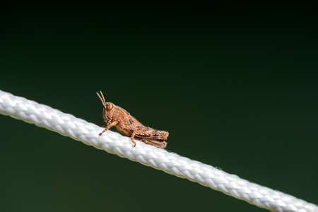 Close-up shot of a grasshopper over a white rope in a forest camping