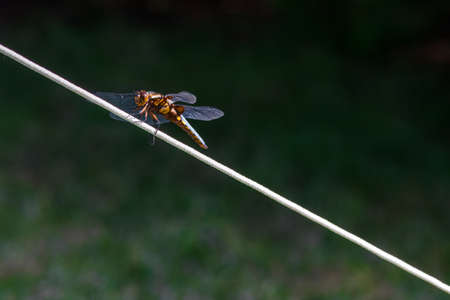 Close-up shot of a dragonfly over rope on a tent in a forest camping Stock Photo