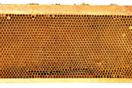 close up of bees on honeycomb in apiary isolated on white background - selective focus, copy space Reklamní fotografie