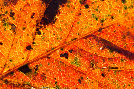 Close up of colorful autumnal leaf - selective focus, copy space