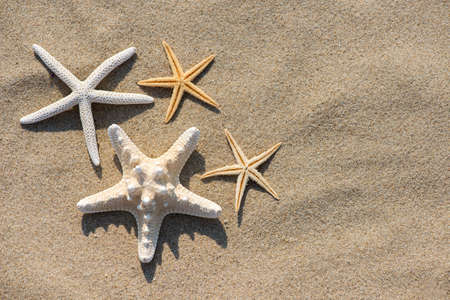 Summer vacation concept starfish on sandy tropical beach - selective focus, top view, copy space