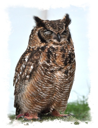 Night birds  Owl  for exhibition Stock Photo - 14422110