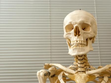 esqueleto humano: Decoraci�n (modelo) esqueleto humano y el cr�neo en el hospital Foto de archivo
