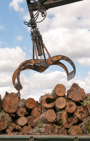 Timber for transportation (loading a truck) photo