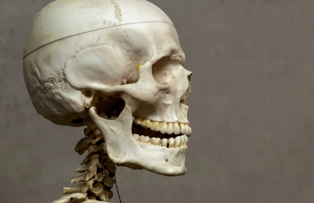 Decorative  model  human skeleton and skull in hospital