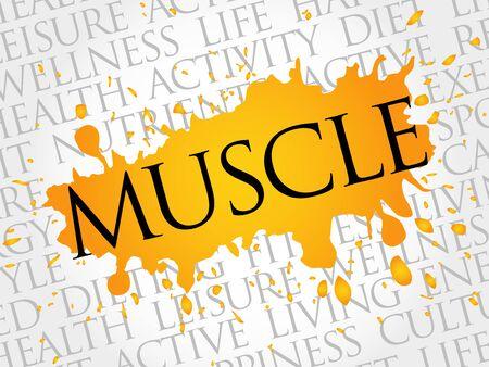 hormones: Muscle word cloud, health concept