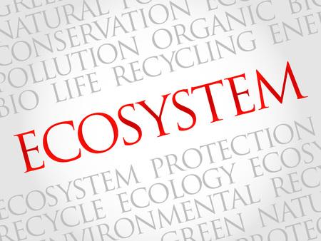 ecosistema: Ecosistema de nube de palabras, el concepto de medio ambiente Vectores