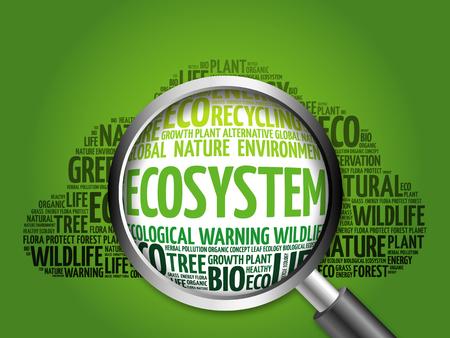 ecosistema: Ecosistema de la nube de palabra con la lupa, el concepto de ecolog�a