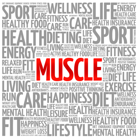 hormones: Muscle word cloud background, health concept