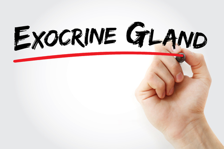 prostatic: Hand writing Exocrine gland with marker, concept background