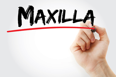 word of mouth: Hand writing Maxilla with marker, concept background