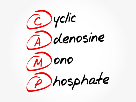 CAMP - Cyclic Adenosine Mono Phosphate acronym, concept background 向量圖像