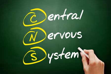 CNS - Central Nervous System acronym, concept on blackboard Stock Photo - 116211688