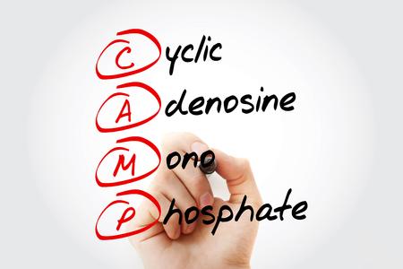 CAMP - Cyclic Adenosine MonoPhosphate acronym with marker, concept background