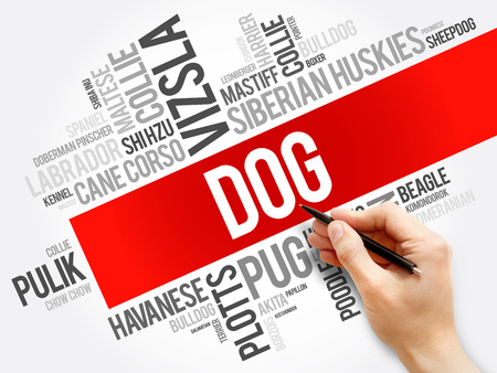 List of most popular dog breeds word cloud collage, animal concept background Stock Photo