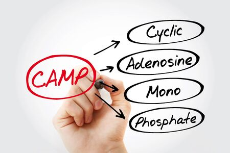 CAMP - Cyclic Adenosine MonoPhosphate acronym, medical concept background