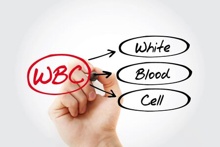 WBC - White Blood Cell acronym, medical concept background Stock Photo