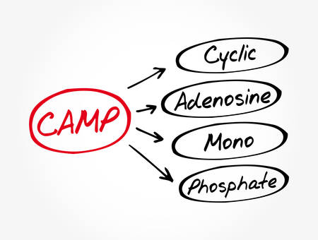 CAMP - Cyclic Adenosine MonoPhosphate acronym, medical concept background