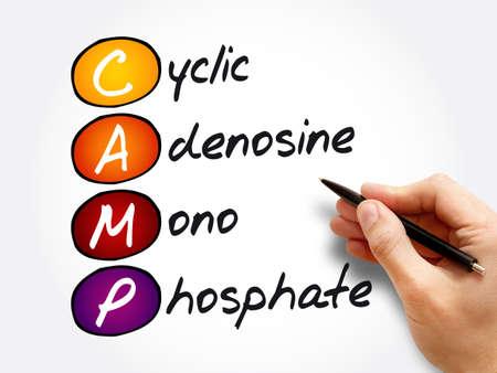 CAMP - Cyclic Adenosine MonoPhosphate acronym, concept background 版權商用圖片