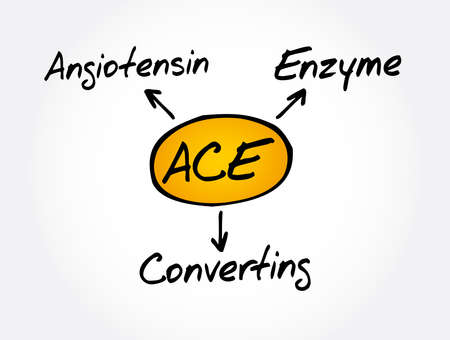 ACE - Angiotensin Converting Enzyme acronym, concept background 向量圖像