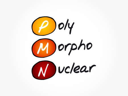 PMN - PolyMorphoNuclear acronym, concept background Vector Illustration